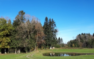 STOREE testers plant trees